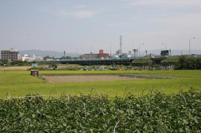katuragawa.jpg